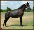KAL'S BLACK BEAUTY #986302