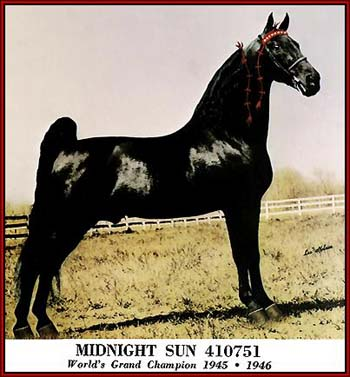 The immortal Midnight Sun - the 'Horse of the Century' and World Grand Champion in 1945 and 1946.