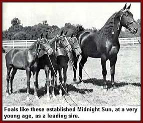 Midnight Sun demonstrating the unsurpassable conformation he passed on to his progeny.